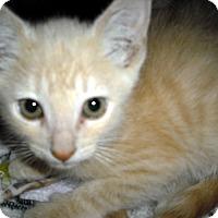 Adopt A Pet :: Ike - Wickenburg, AZ