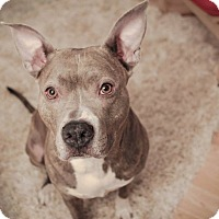 Adopt A Pet :: Sophie - Chicago, IL