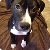 Adopt A Pet :: Lydia - Villa Park, IL