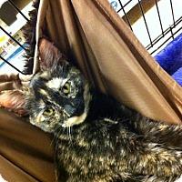 Adopt A Pet :: Beatrice - Watkinsville, GA