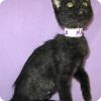 Adopt A Pet :: Nala - Powell, OH