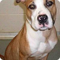 Adopt A Pet :: Anikin - Channahon, IL