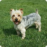 Adopt A Pet :: Grayson - New Oxford, PA