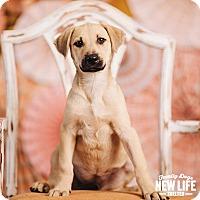 Adopt A Pet :: Cutie - Portland, OR