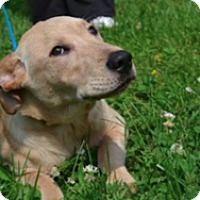 Adopt A Pet :: Julia - Sparta, NJ