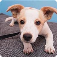 Adopt A Pet :: Thimbalina - Portland, OR