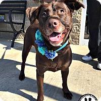 Adopt A Pet :: Marley - Kimberton, PA