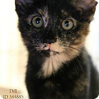Adopt A Pet :: Dill - Camden, DE
