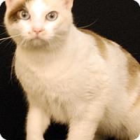 Adopt A Pet :: Starbright - Newland, NC