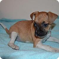 Adopt A Pet :: Doc - Winder, GA
