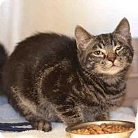 Adopt A Pet :: *CLYDE - Jackson, CA