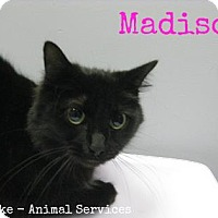 Adopt A Pet :: Madison - Hamilton, ON