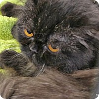 Adopt A Pet :: Bonnie - Beverly Hills, CA