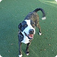 Adopt A Pet :: TRIGGER - Wilmington, NC