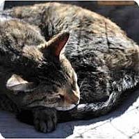 Adopt A Pet :: Malia - El Cajon, CA
