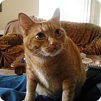 Adopt A Pet :: Dori - Laguna Woods, CA