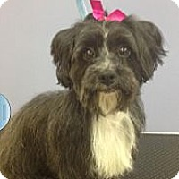 Adopt A Pet :: SADIE - New Windsor, NY