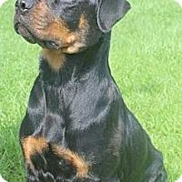 Adopt A Pet :: Oakley - Alachua, GA