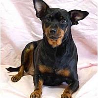 Adopt A Pet :: Minnie Pearl - San Francisco, CA