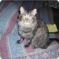 Adopt A Pet :: Lucky Girl - Hamburg, NY