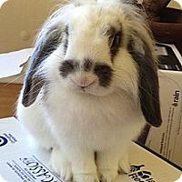 Adopt A Pet :: Matt - Los Angeles, CA