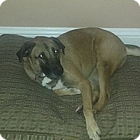 Adopt A Pet :: Zucca(ADOPTED!) - Chicago, IL