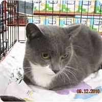 Adopt A Pet :: Smokey - Riverside, RI
