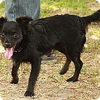 Adopt A Pet :: Henry-little Peanut - Staunton, VA
