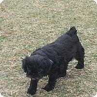 Adopt A Pet :: Windy - San Antonio, TX