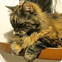Adopt A Pet :: Lilah - Davis, CA
