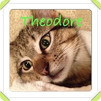Adopt A Pet :: Theodore - Mount Laurel, NJ