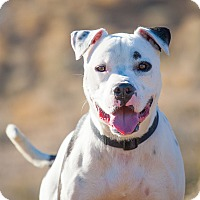 Adopt A Pet :: Tatum - Washoe Valley, NV
