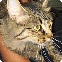 Adopt A Pet :: Nina - Ravenna, TX