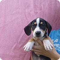 Adopt A Pet :: Jack - Oviedo, FL