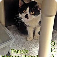 Adopt A Pet :: B-11 - Triadelphia, WV