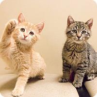Adopt A Pet :: Jonzi - Chicago, IL