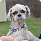 Adopt A Pet :: Busy