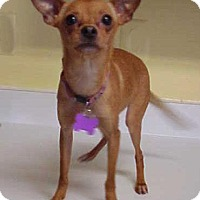 Adopt A Pet :: Arizona - 7 lbs - Dahlgren, VA