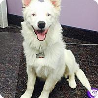 Adopt A Pet :: Arianna (pending) - Coldwater, MI