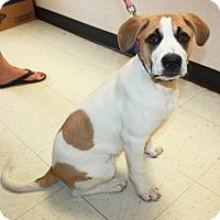 Adopt A Pet :: Sabrina - Sparta, NJ