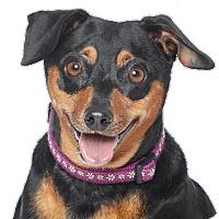 Adopt A Pet :: Tootsie - Los Angeles, CA