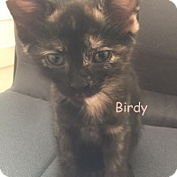 Adopt A Pet :: BIRDY - Cliffside Park, NJ