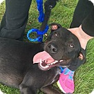 Adopt A Pet :: Rascal