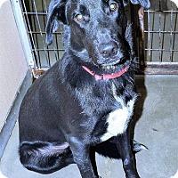 Adopt A Pet :: Bear Paw - San Jacinto, CA