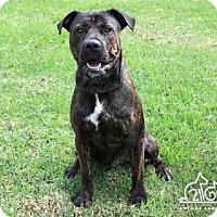 Adopt A Pet :: ROLLY - Irvine, CA