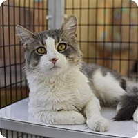 Adopt A Pet :: Outlook - Lincoln, CA