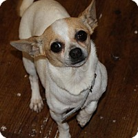 Adopt A Pet :: Bambi - Prosser, WA