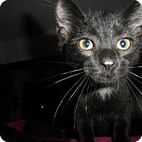 Adopt A Pet :: Daytona - Milwaukee, WI