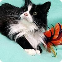 Adopt A Pet :: Bijou - Hornell, NY
