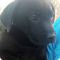 Adopt A Pet :: Jesse - Allen town, PA